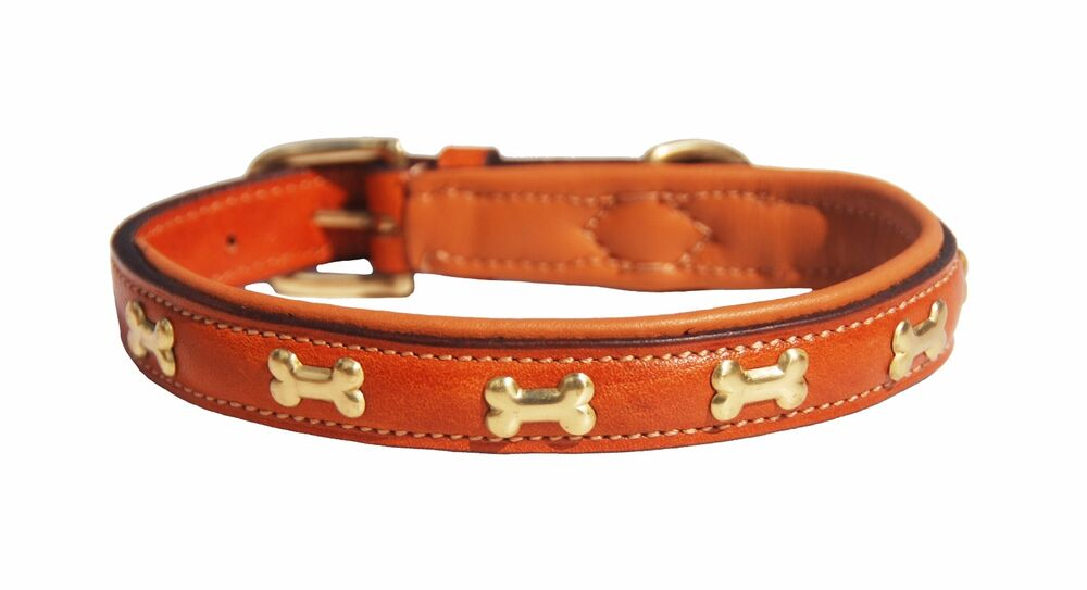 Where To Buy Brass Fittings Dog Collar