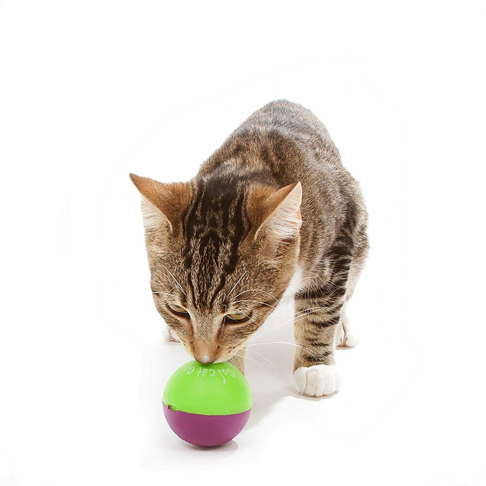 Where To Buy Go Cat Food