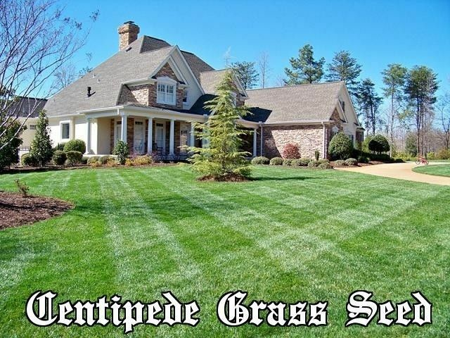 Millipedes & Centipedes | Spring-Green Lawn Care Guide
