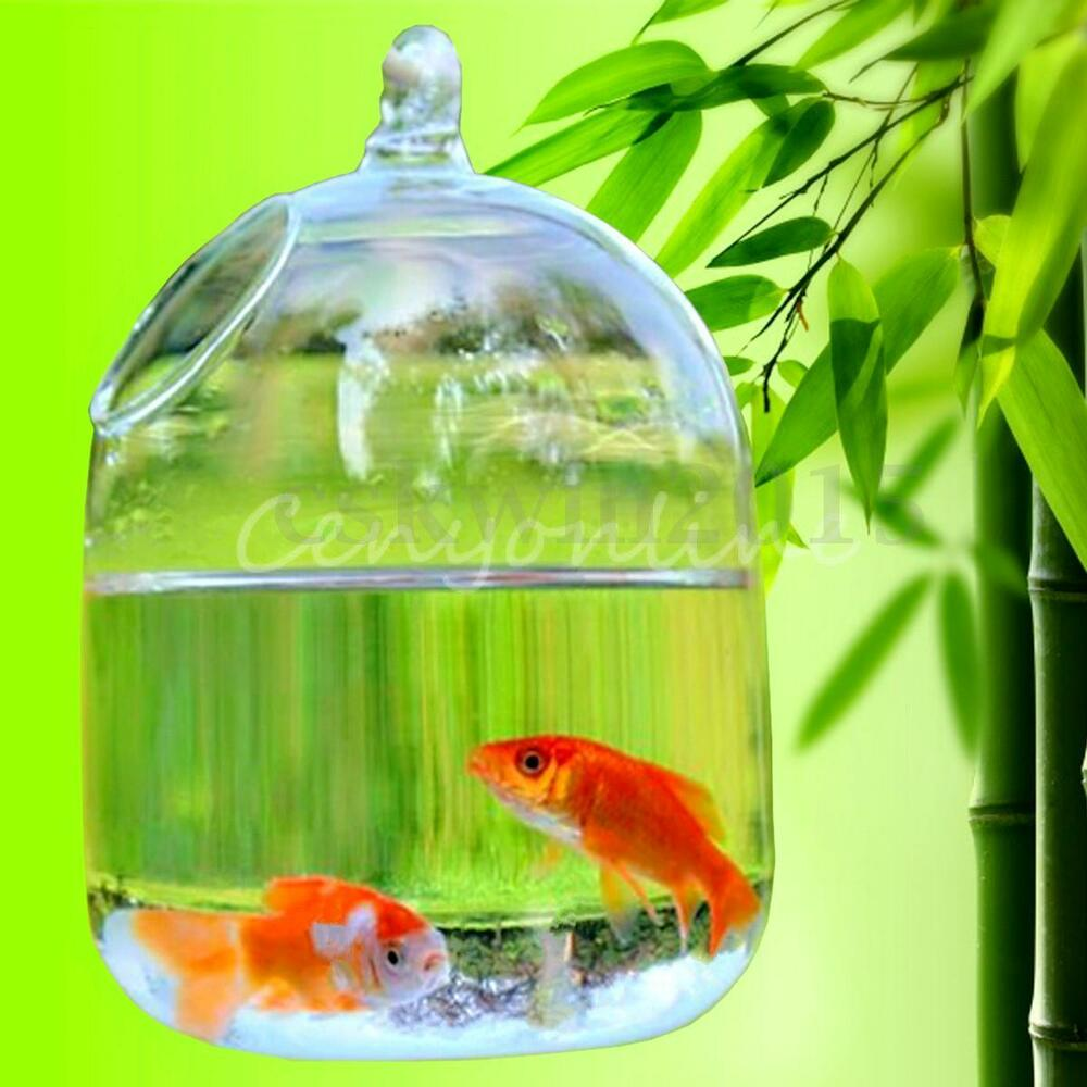 Hydroponic wall hanging bubble aquarium fish glass vase for Wall hanging fish tank