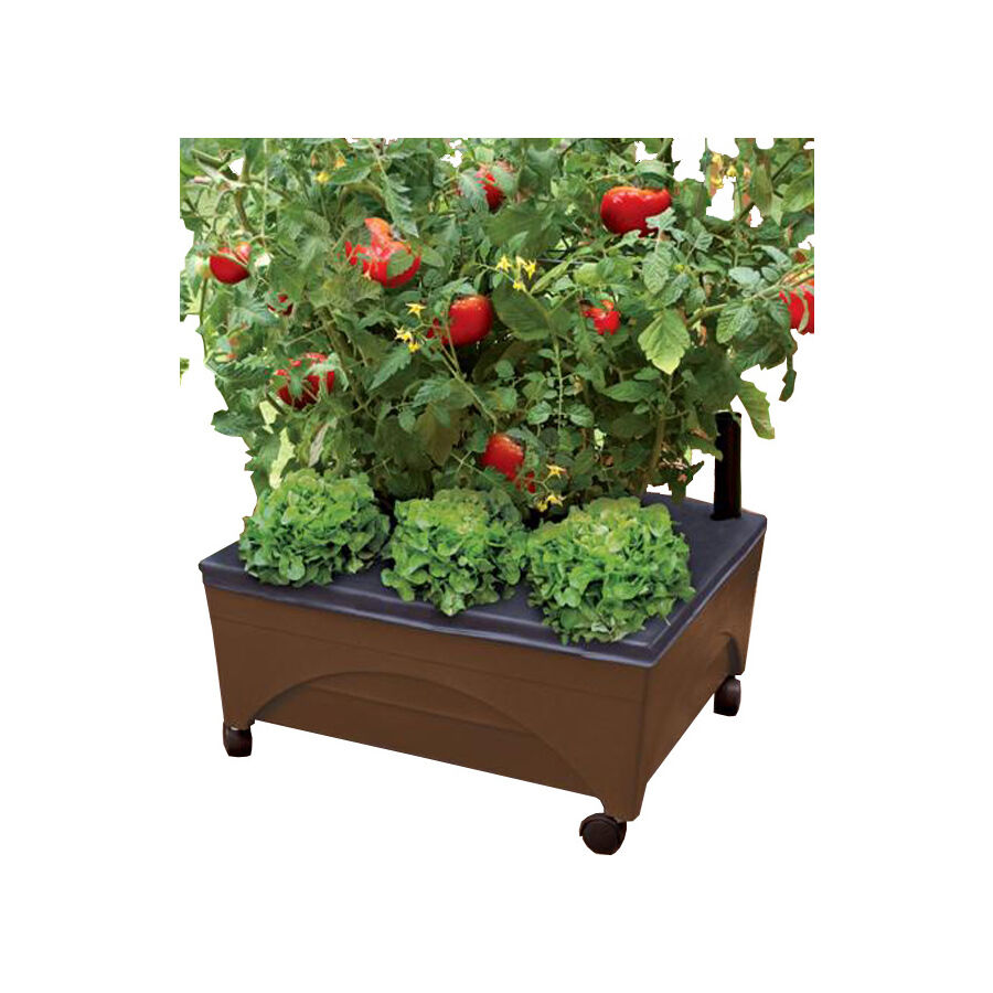 2 gallon self watering patio deck tomato vegetable raised for Watering vegetable garden