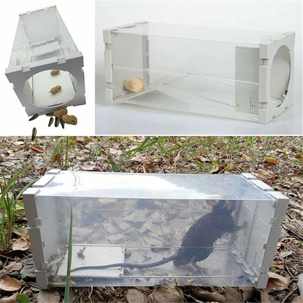 White humane rat trap cage animal pest rodent mice mouse