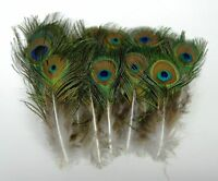"1,000 Pcs MINI PEACOCK Natural Feathers 4-10"" Pads/Costume/Craft/Headband/Bridal"