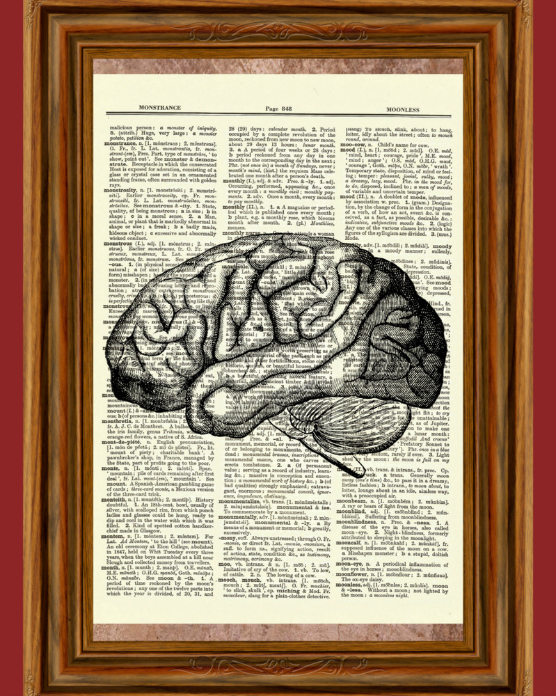 Brain Human Anatomy Dictionary Art Print Poster Picture Skull
