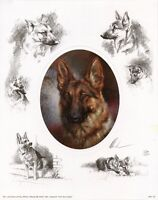 GERMAN SHEPHERD GSD ALSATIAN DOG LIMITED EDITION PRINT