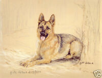 GSD ALSATIAN GERMAN SHEPHERD DOG LIMITED EDITION PRINT