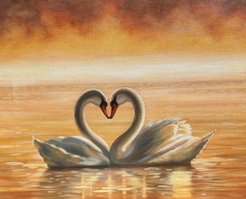how to draw swans in love