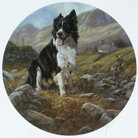 BORDER COLLIE SHEEPDOG DOG ART LIMITED EDITION PRINT by John Trickett