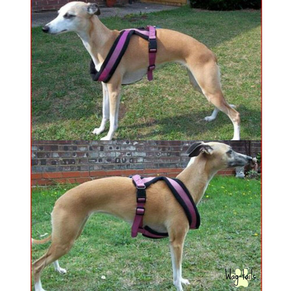 Large Dog Harnesses Uk