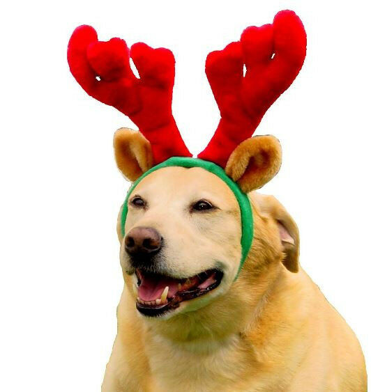 Kyjen Dog Antlers Holiday Christmas Red Green Pet Xmas