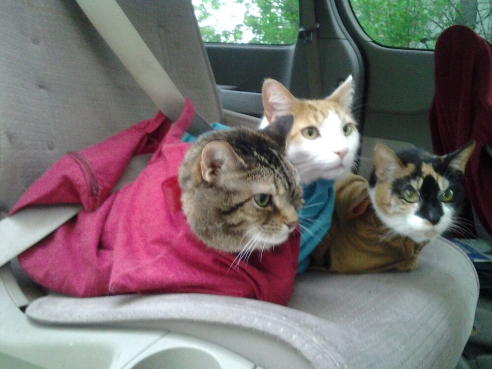 Best Cat Carriers Car Travel