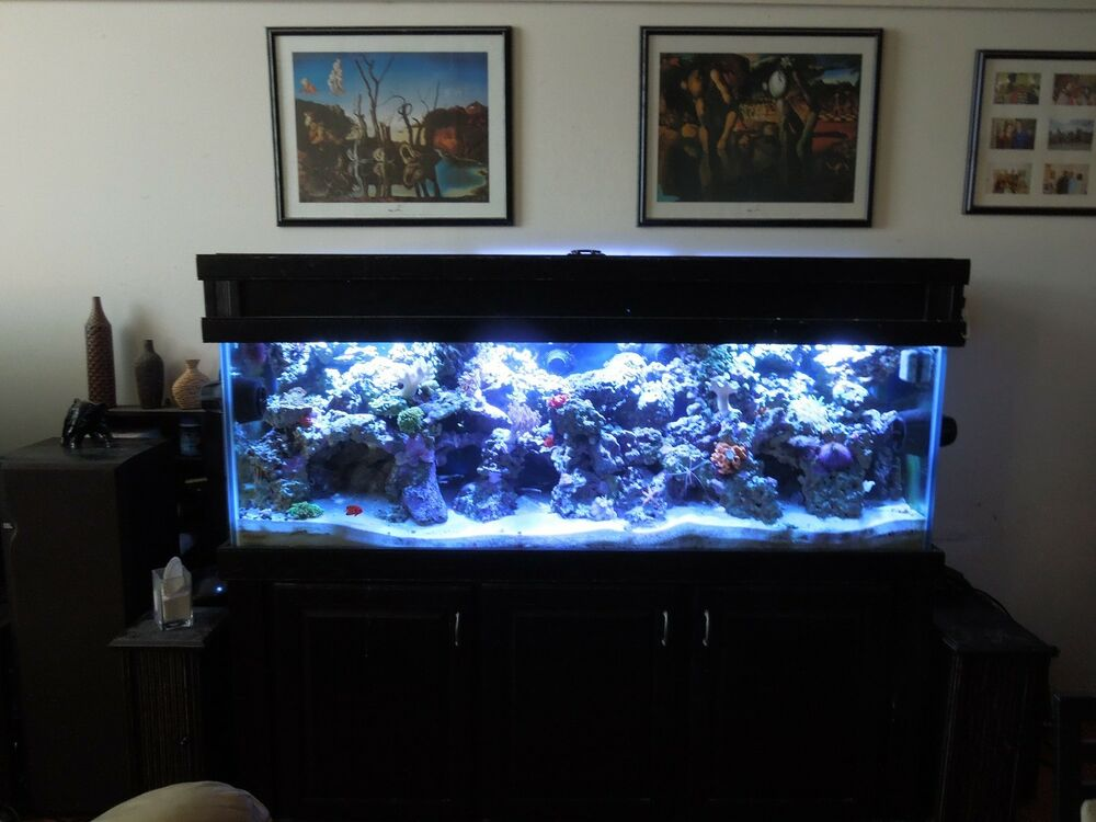 180 gallon reef ready saltwater aquarium complete setup for Marine fish tanks