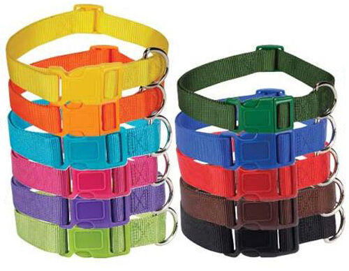 Bright Colored Dog Collars