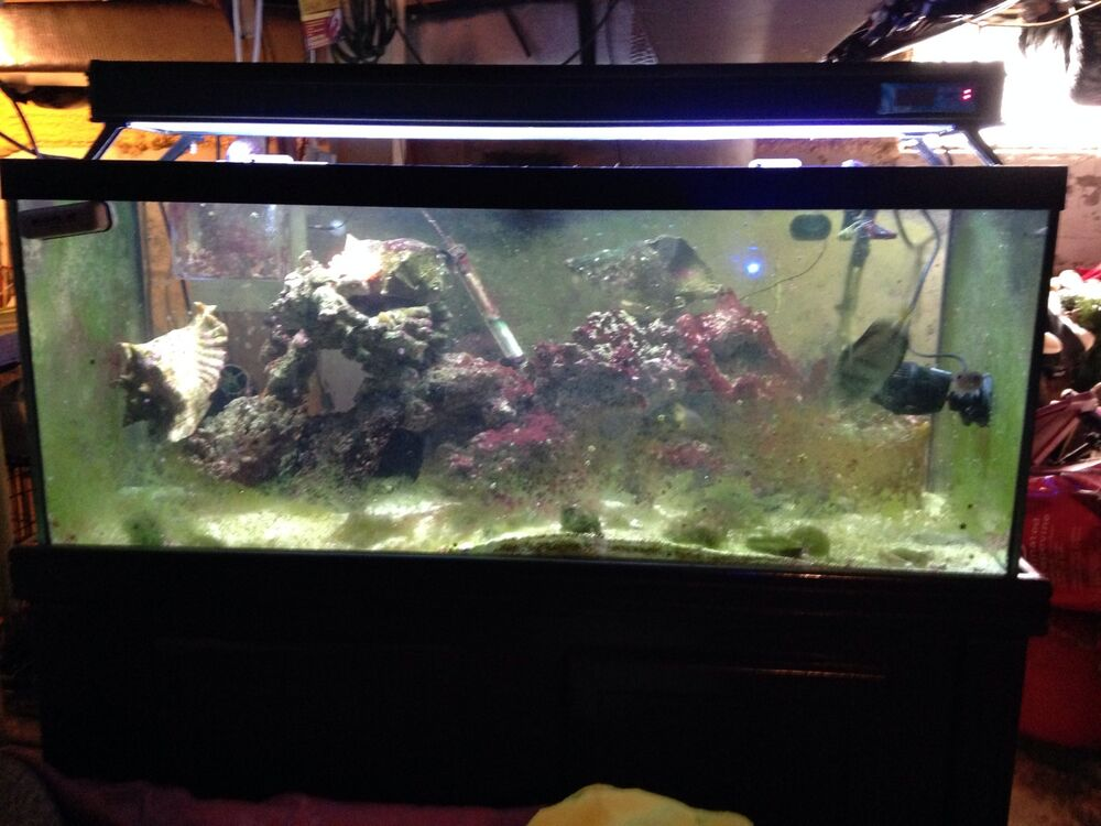 Salt water fish tank ebay for Fish tanks for sale ebay