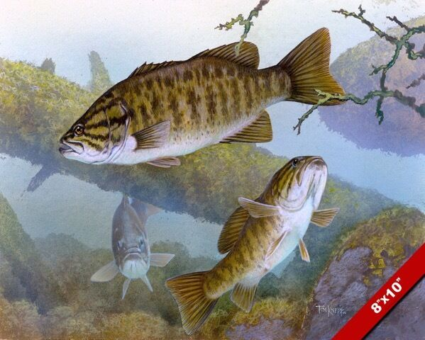 small mouth bass underwater lake fish oil painting art
