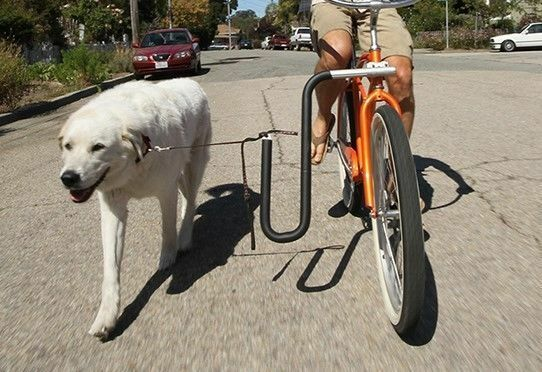 Moved By Bikes Dog Runner Adjustable Quick Release Dog