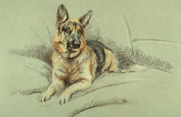 GERMAN SHEPHERD GSD ALSATIAN DOG LIMITED EDITION PRINT by the Late Mick Cawston