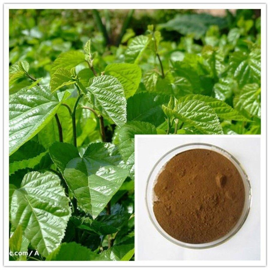 Mulberry leaf powder extract 5 1 5grams ebay