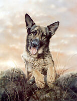 GERMAN SHEPHERD DOG ALSATIAN GSD FINE ART LIMITED EDITION PRINT - by Paul Doyle