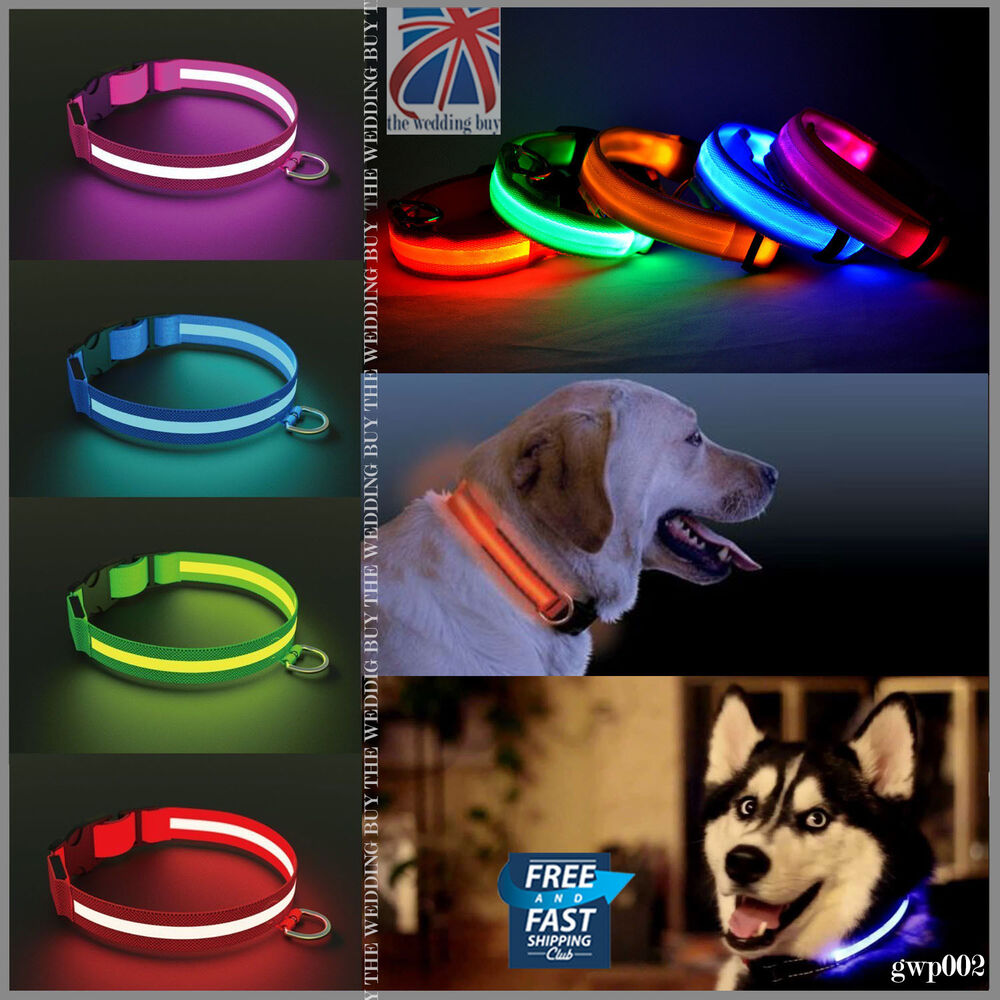 Glow Collars For Dogs Uk