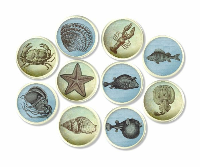 nautical drawer pulls blue green coastal drawer pull shell house 29358