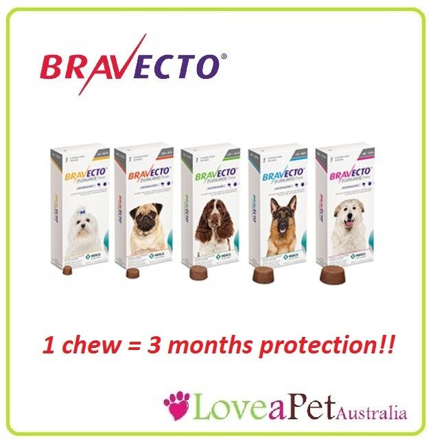 Bravecto Chews For Dogs Flea And Tick Treatment For Dogs