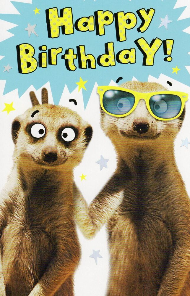 Funny Meerkat Happy Birthday Card Humour Greeting Cards ...