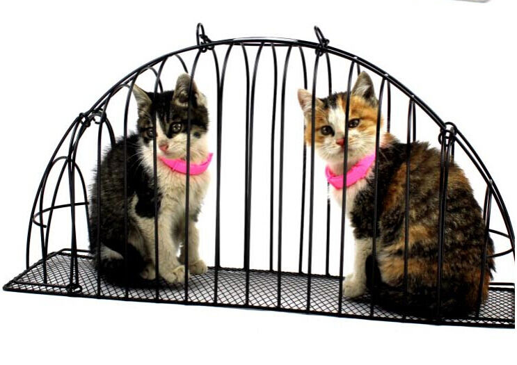 Cat Bath Cage Double Door Cat Cage Carrier Injections Anti
