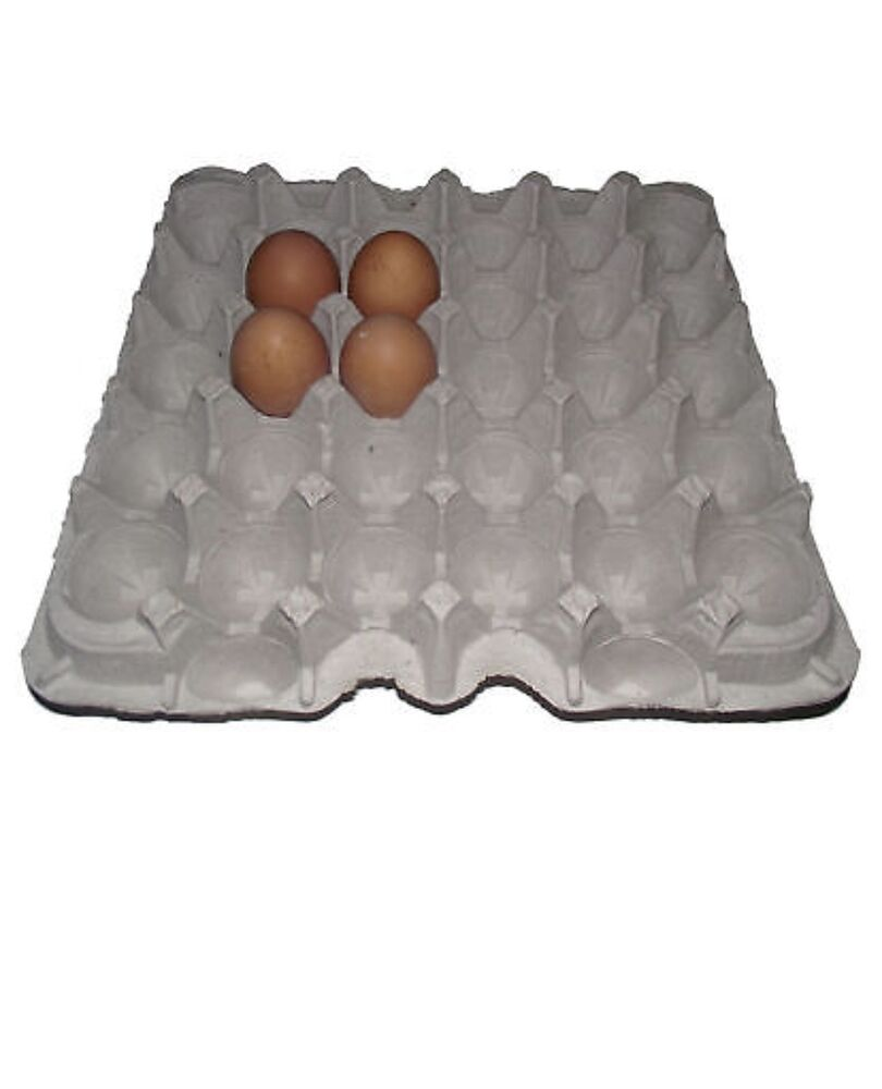 24 chicken egg cartons paper trays flats hatching craft ebay for How to make paper egg trays