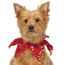 Aria Red Shimmer Sequin Dog Scrunchy Pet Scrunchies holiday Christmas red
