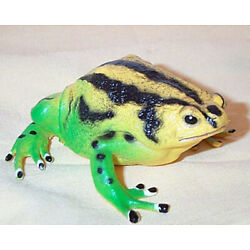 Narrow Mouth Toad Replica - Realistic AAA