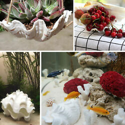 Kyпить 10-12cm Natural Marine Shell Tridacna Clam Conch Home Furnishing Giant Sea US на еВаy.соm
