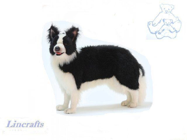 how to draw a realistic border collie