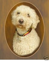 Spanish Water Dog Mousemat Design No 3 by Starprint