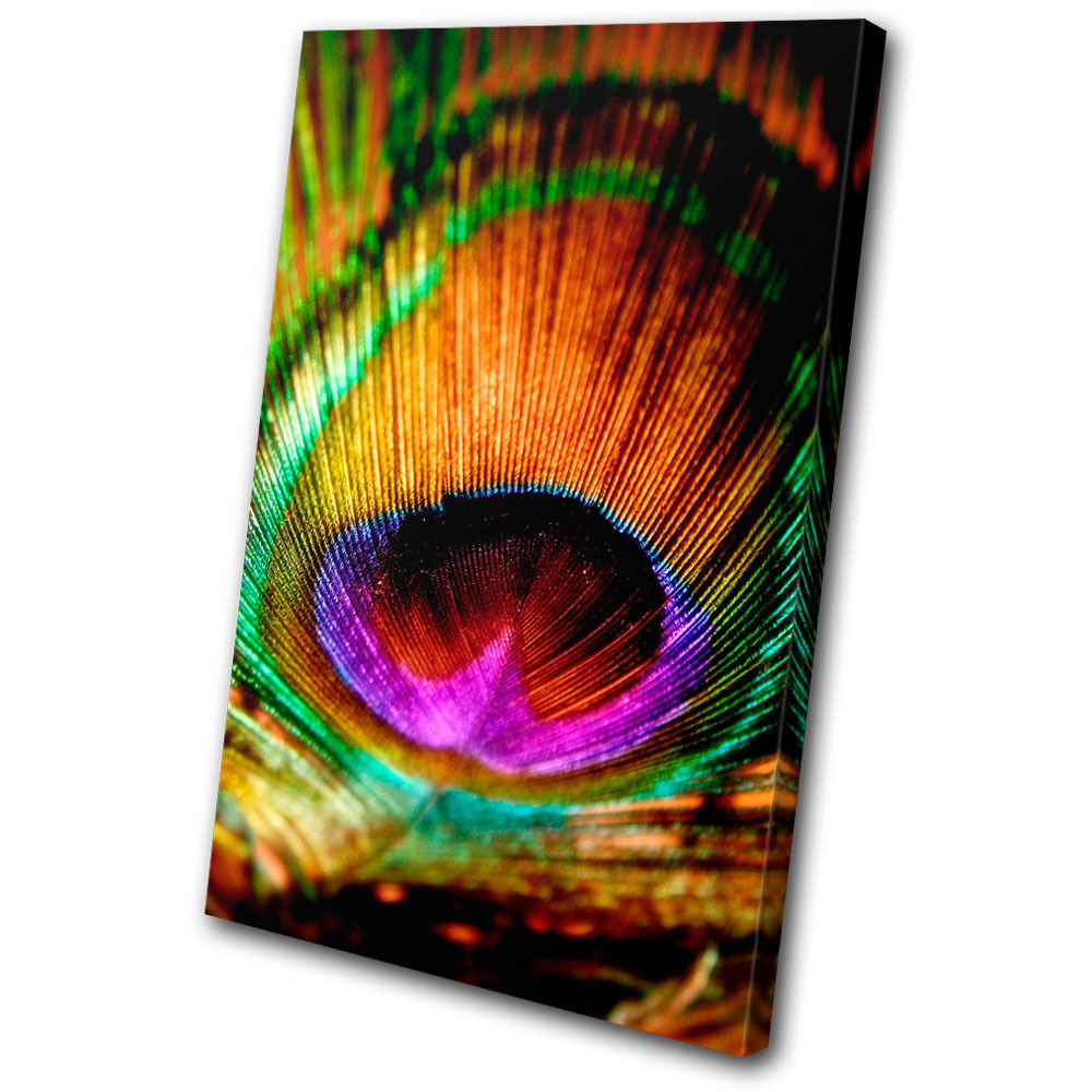 Animals Peacock Feathers SINGLE CANVAS WALL ART Picture ...