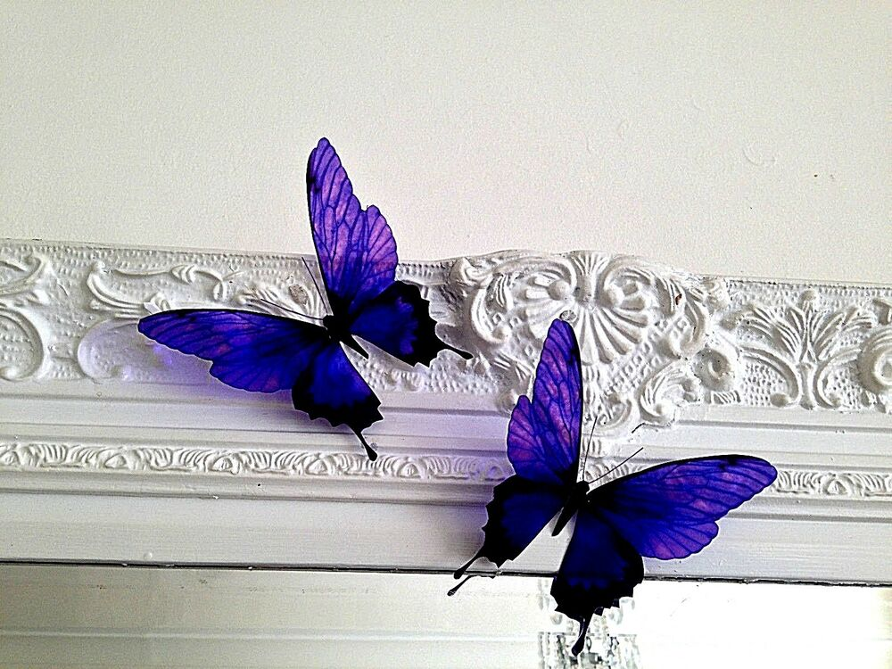 4 Purple In Flight 3d Butterflies Wall Mounted Butterfly. Kidney Disease Signs Of Stroke. Straight Gold Banners. Where Can You Get Banners Made. Jpeg Decals. Neutral Nursery Decals. Chat Stickers. Terminal Cancer Signs. Meconium Aspiration Signs