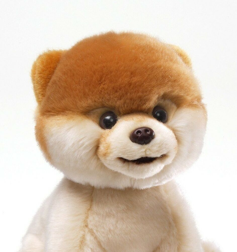 Boo The Toy Dog