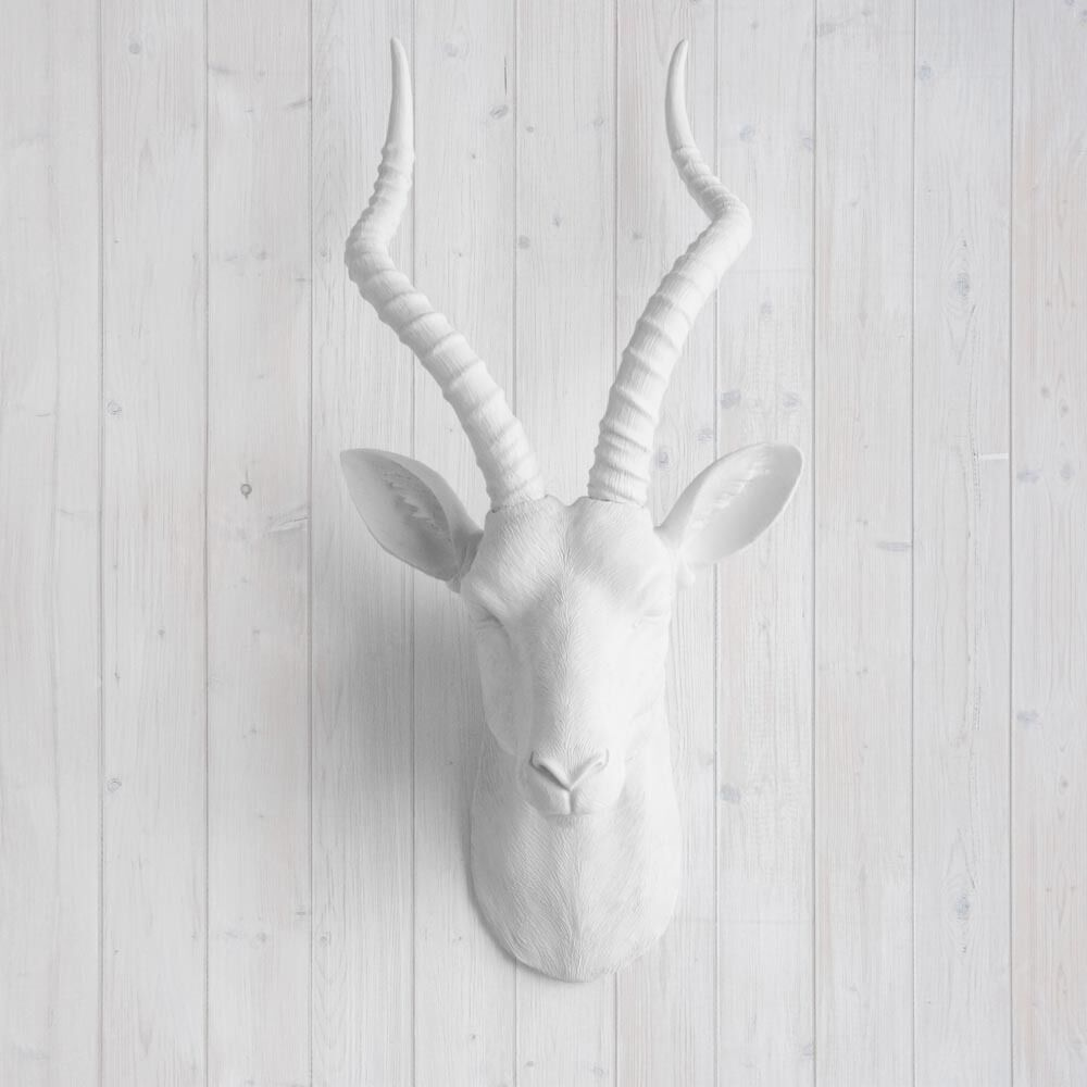 wall charmers faux white antelope head fake animal antler african taxidermy ebay. Black Bedroom Furniture Sets. Home Design Ideas
