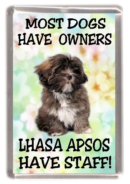 Lhasa Apso Dogs for Adoption in 14241, USA area