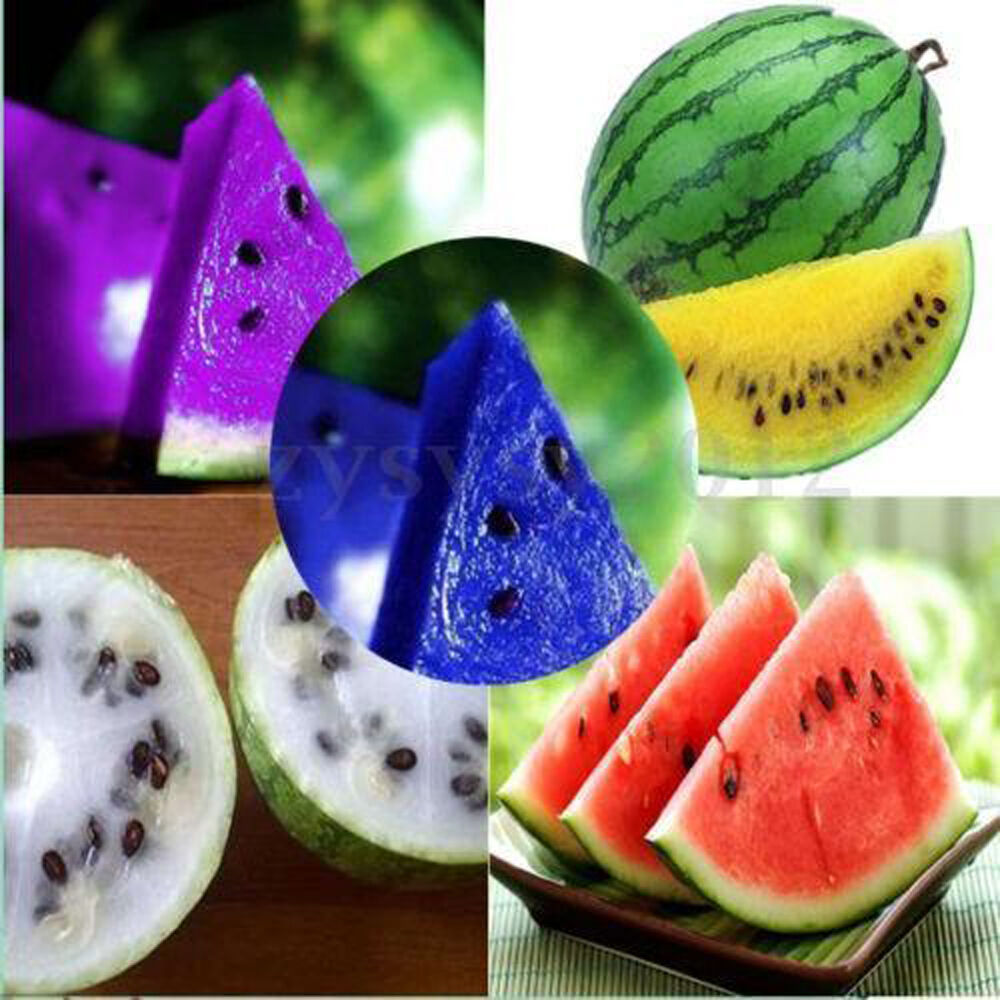 10X Unique Blue Watermelon Seeds Rare Vegetable Organic ...