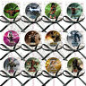 Mortal Kombat Video Game Lollipops Suckers with Black Ribbon Bows Favors -12 pcs