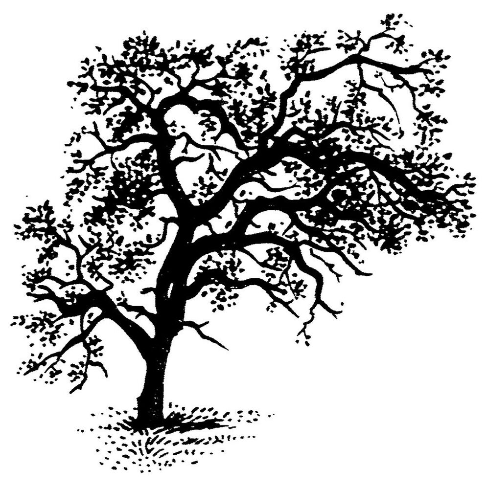 Unmounted Rubber Stamps Scenic Stamps Nature Trees
