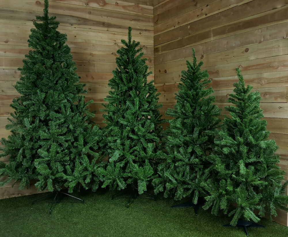 4ft, 5ft, 6ft, 7ft, Or 8ft Colorado Spruce Christmas Tree