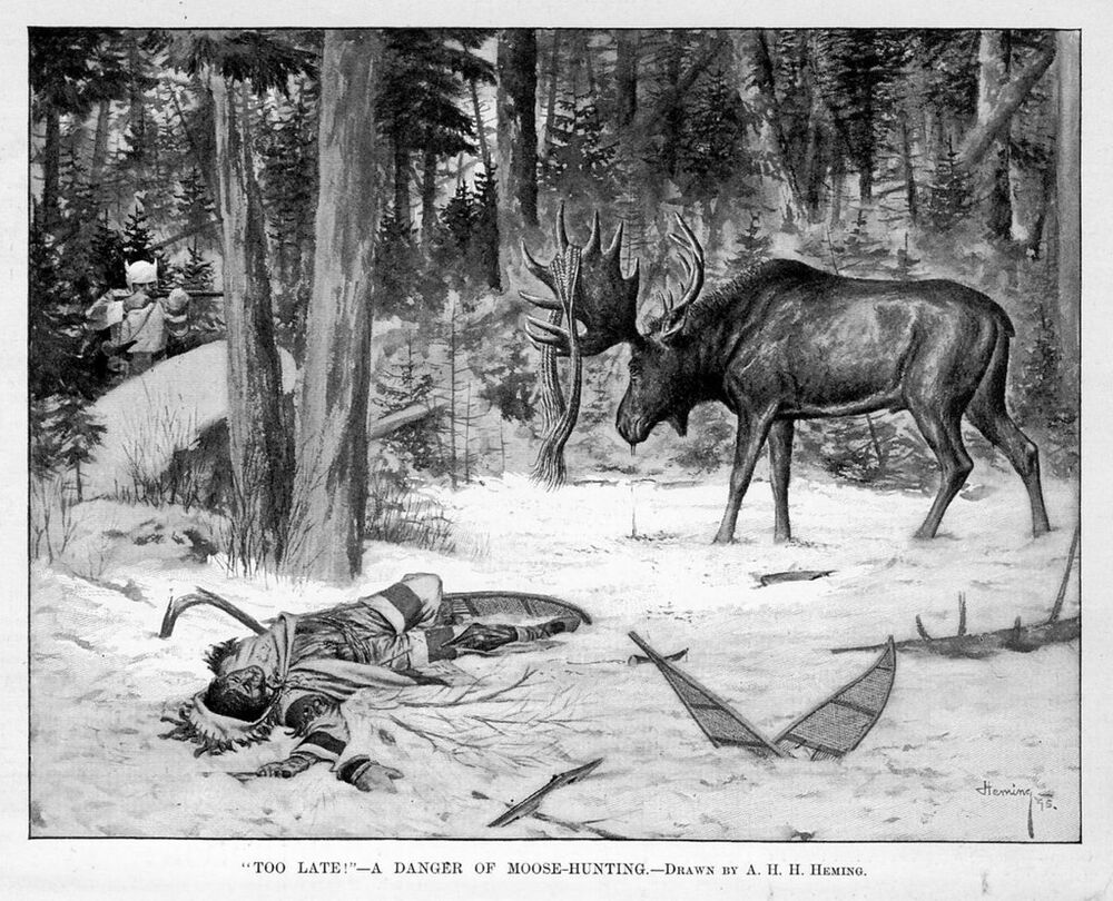 Hunting Moose On Snowshoes Hunter Gored Killed By Bull