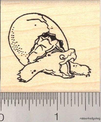 Baby Snapping Turtle Hatching Rubber Stamp G12003 Wm Ebay