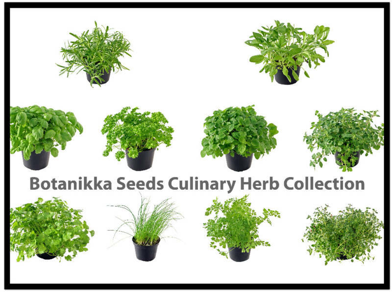 Culinary Herb Seed Collection Build Your Own Botanikka Ebay