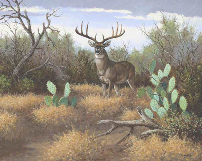 30 plus by david drinkard giclee on canvas whitetail deer
