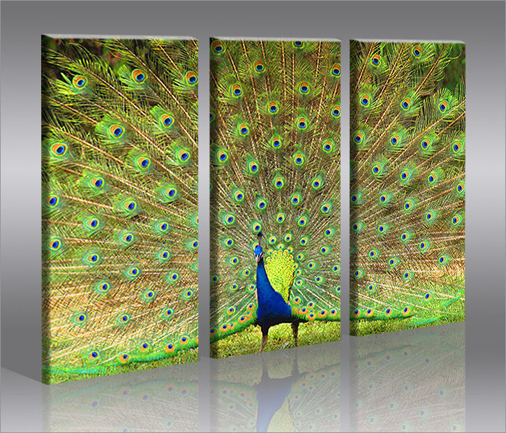peacock pfau 3 bilder bild vogel natur auf leinwand wandbild poster ebay. Black Bedroom Furniture Sets. Home Design Ideas