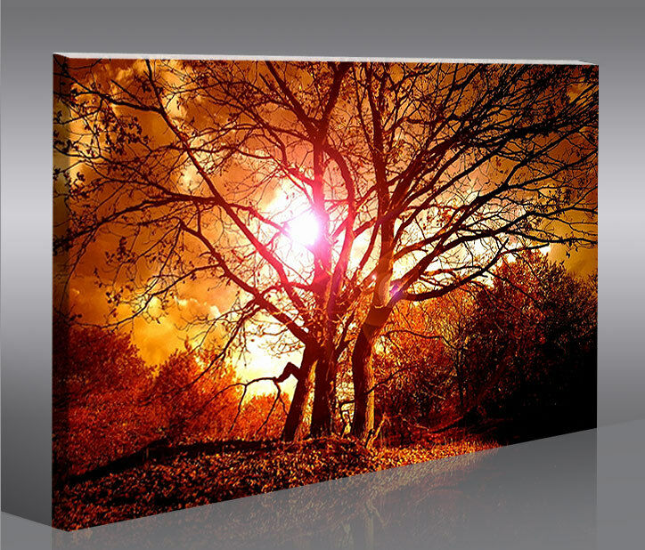 suntree wald b ume 1p bild bilder auf leinwand wandbild poster ebay. Black Bedroom Furniture Sets. Home Design Ideas