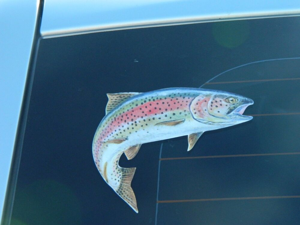Fishing rainbow trout a one fish only sticker for Trout fishing tackle
